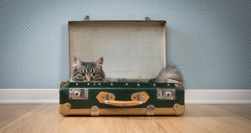 Our tips to make moving with your pets stress free